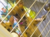 animal charity 2014_6