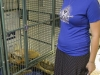 animal charity 2014_8