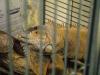 animal charity 2014_9